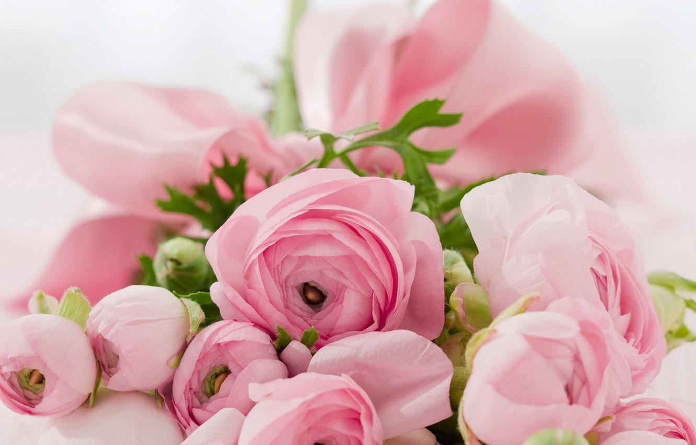 37cef3f031a Фото обои цветы