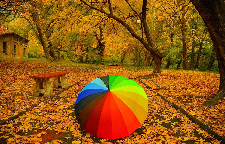 Красивая яркая картинка осень