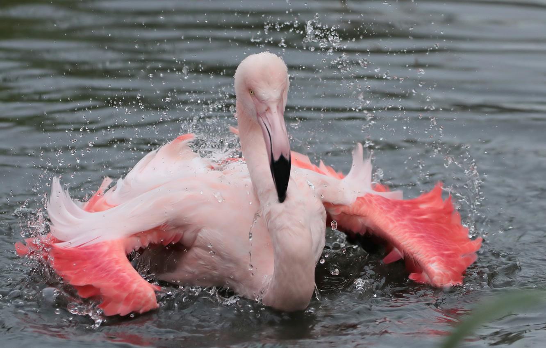 фламинго картинки и человек его немного обжарить