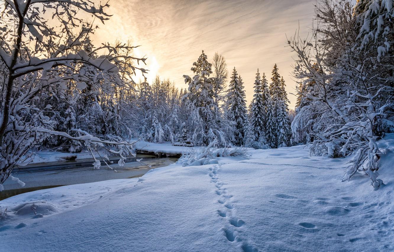 Фото обои зима, лес, снег, следы