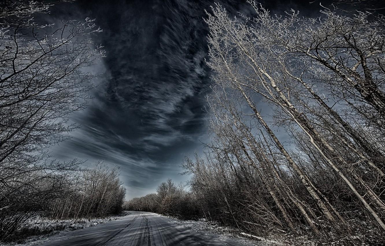 Фото обои зима, дорога, деревья