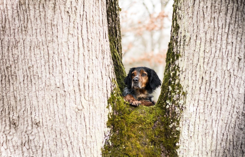 деревья картинки с собаками качества