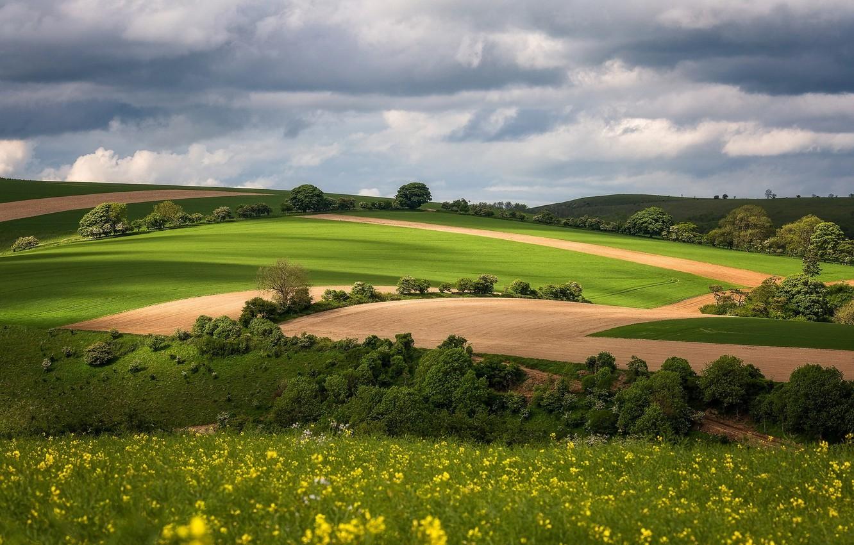 Фото обои поле, небо, природа