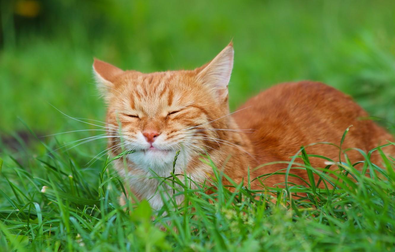 Фото обои осень, кот, кошки, природа, рыжий кот, стёпка, степна