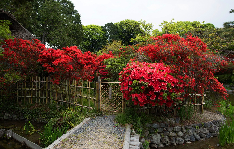 Обои цветы, сша, кусты, ball ground gibbs gardens. Природа foto 16