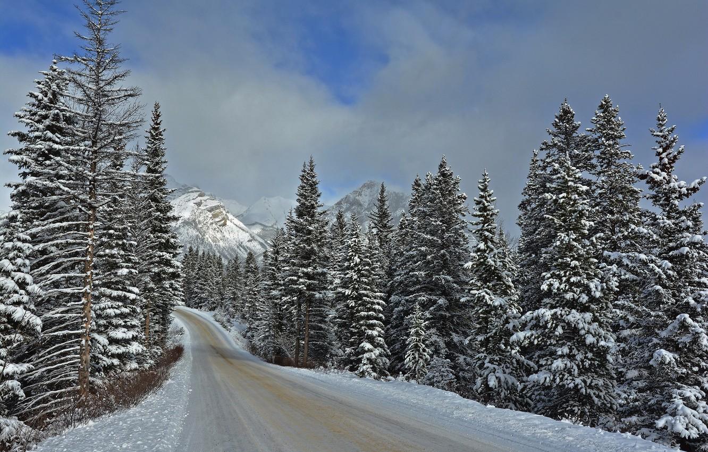 картинки зимнего леса с дорогой сколько