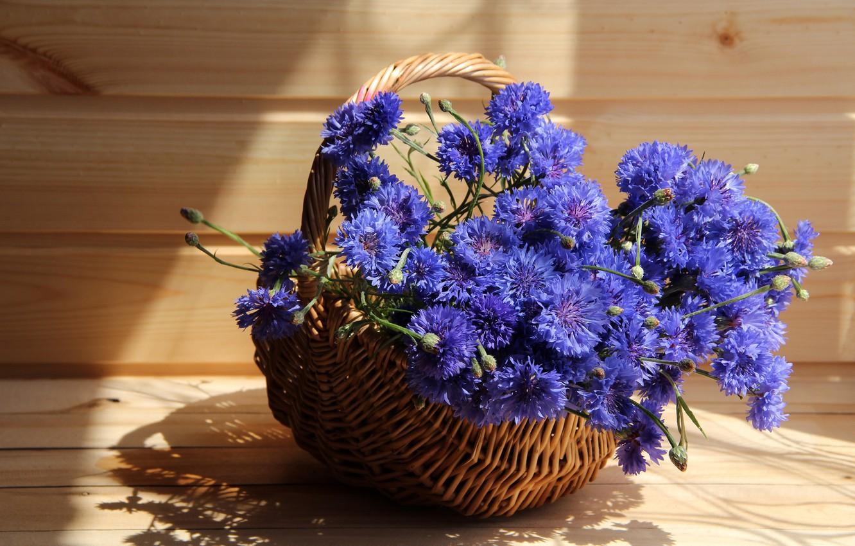 Фото обои лето, цветы, васильки, дача, композиции