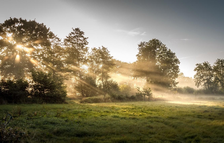 Фото обои лес, свет, природа, туман, утро