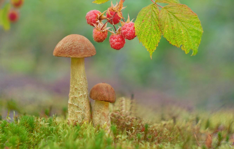 Лес грибы и ягоды картинки