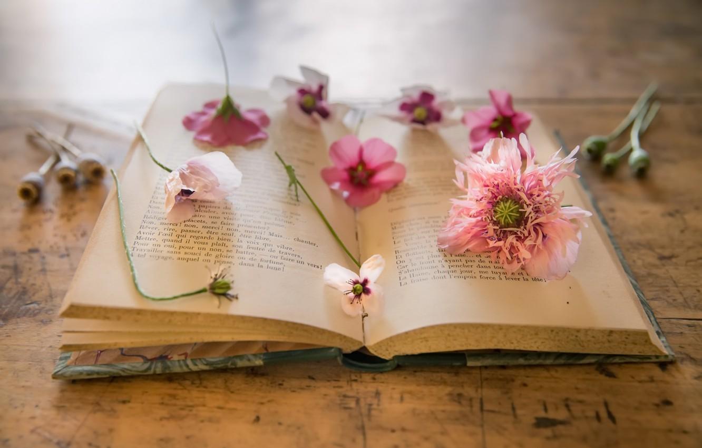 Книжки картинки с цветком