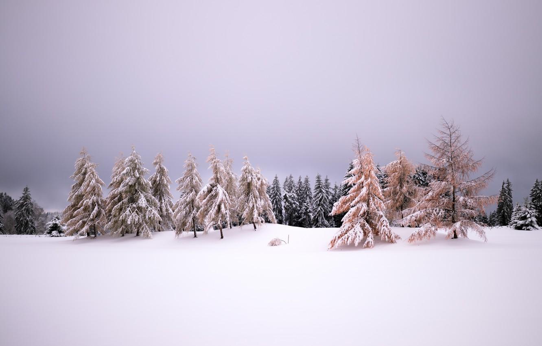 Фото обои зима, снег, природа