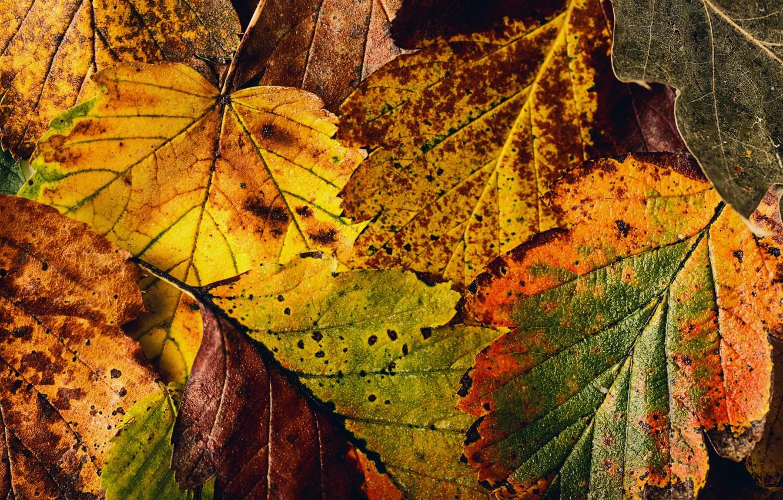 Фото обои осень, листья, текстура