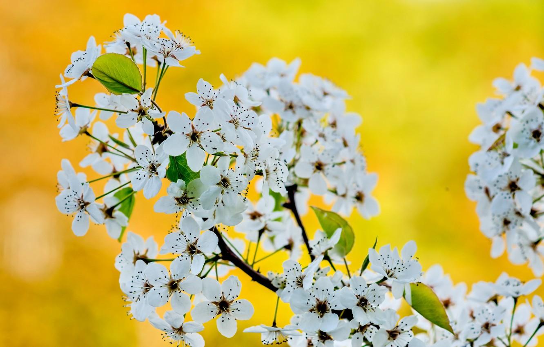 Фото обои макро, весна, сад, соцветие