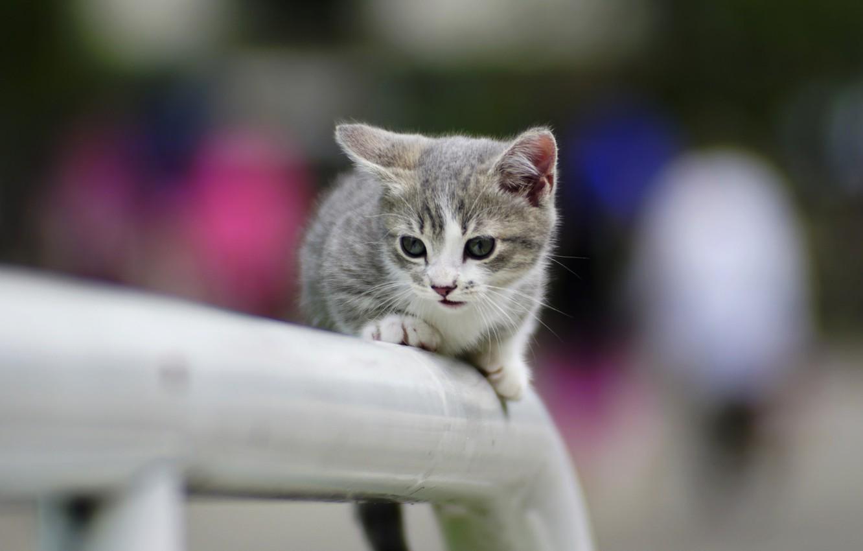 Фото обои котенок, фон, милый