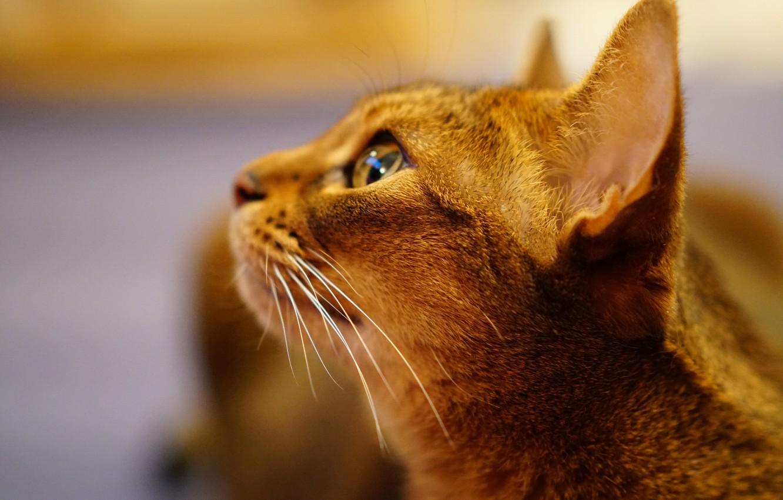 Фото кота в профиль