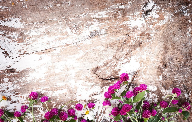 Фото обои фон, Цветы, Клевер, Полевые