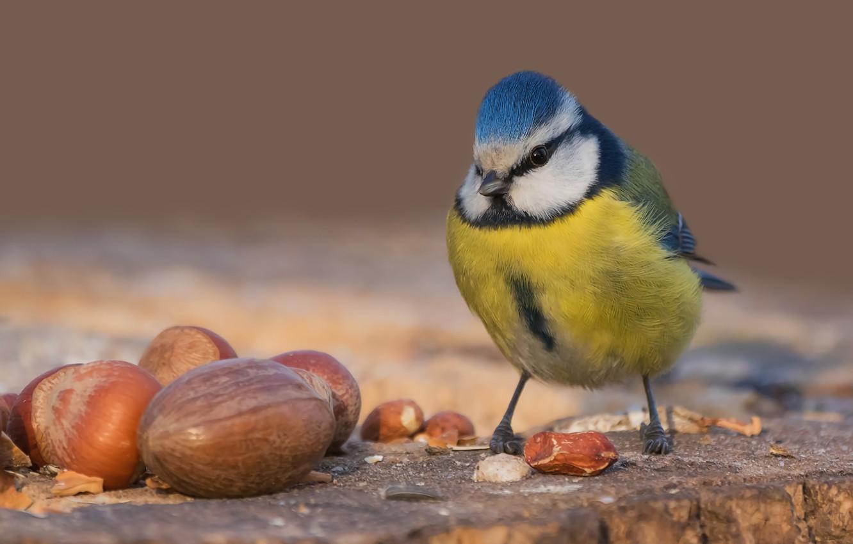 Обои Птичка, семена. Животные foto 11