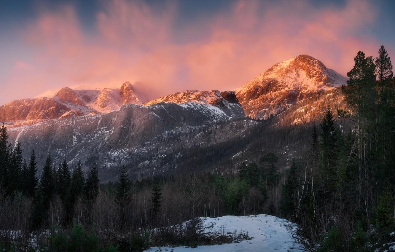 Фото обои лес, свет, снег, горы, природа, Норвегия, Norway, Hemsedal, Хемседал