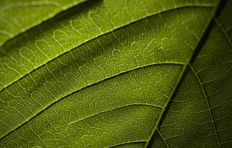 Фото обои макро, лист, текстура, жилки