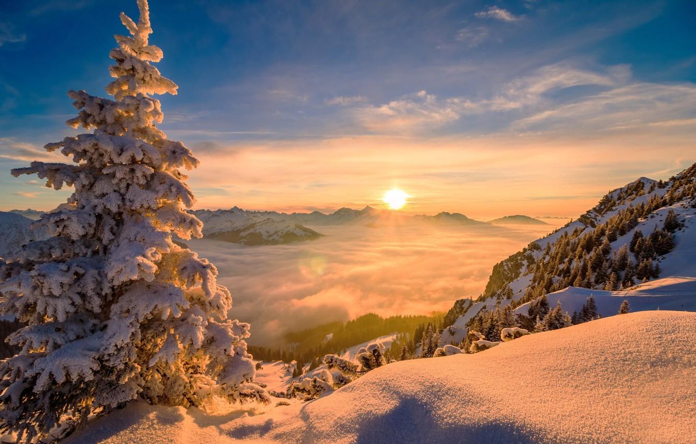Фото обои зима, солнце, облака, деревья, пейзаж, горы, природа, дерево, ель, снега