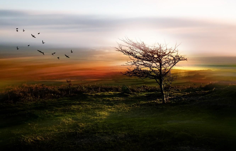 Фото обои поле, птицы, туман, дерево, утро