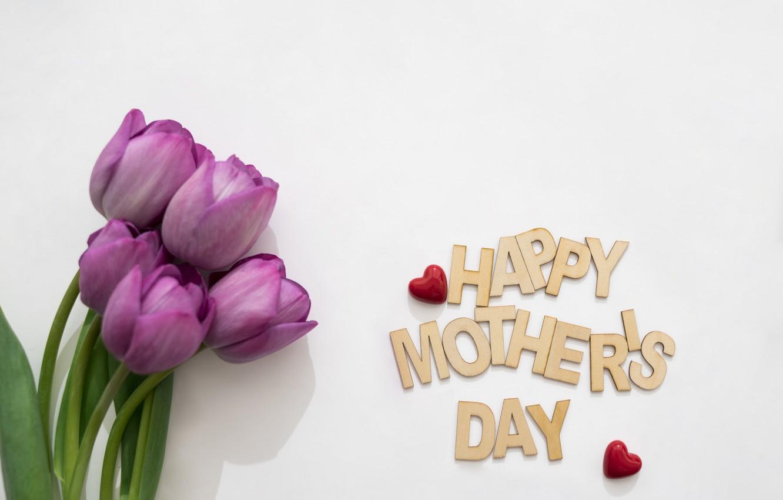 Фото обои цветы, букет, весна, тюльпаны, fresh, flowers, tulips, spring, purple, mother's Day