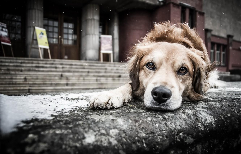картинки бездомного щенка рекомендуем
