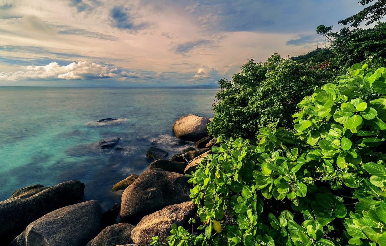 Фото обои море, зелень, вода, природа, тропики, камни, куст
