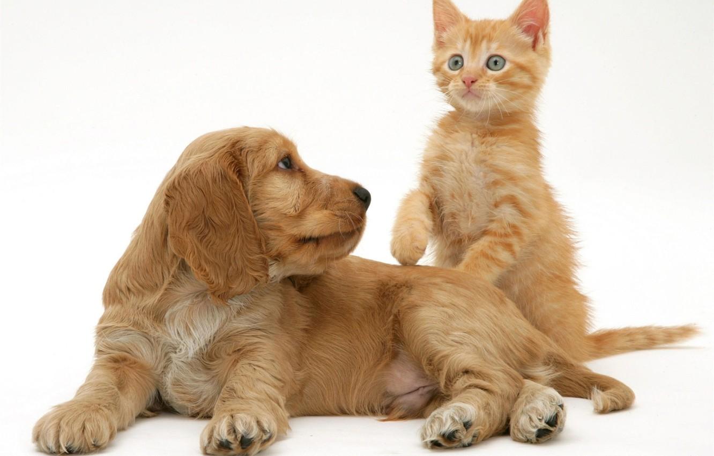 Все картинки кошки и собаки