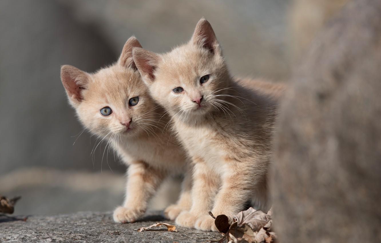 фотографии с котятами часто