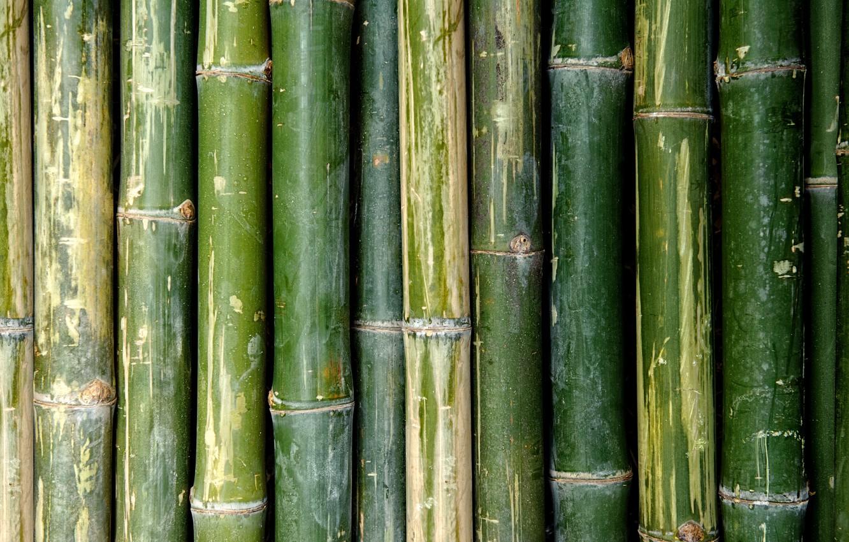 Фото обои green, Bamboo, pattern