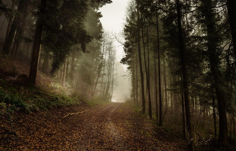 Фото обои дорога, осень, лес, туман