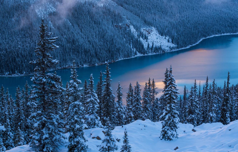 Фото обои Природа, Зима, Деревья, Снег, Banff National Park, Canada, Peyto Lake