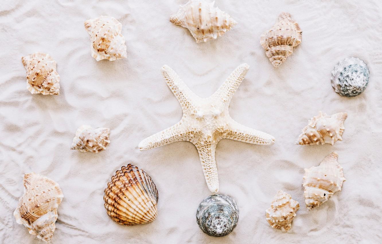 Фото обои песок, пляж, звезда, ракушки, summer, beach, sand, marine, starfish, seashells