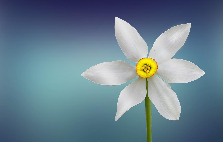 Фото обои цветок, растение, лепестки