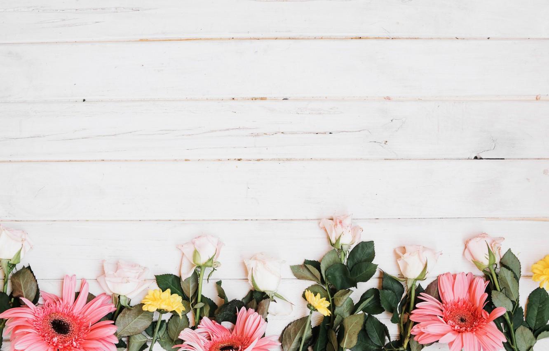 Фото обои цветы, фон, розы, герберы, хризантемы