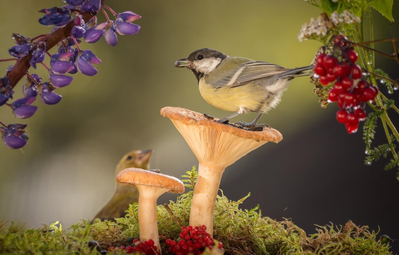 Фото обои цветы, птицы, природа, ягоды, грибы, мох, синицы