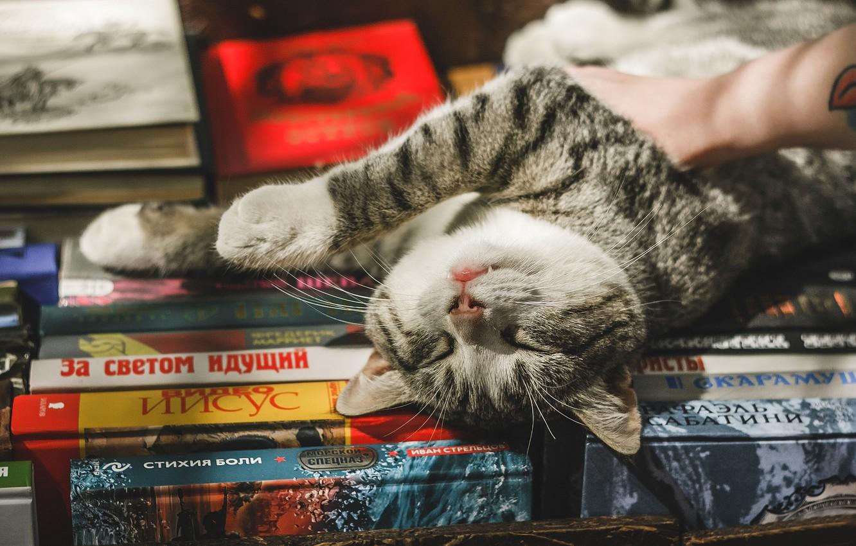 Фото обои кошка, кот, релакс, книги, расслабон, котейка
