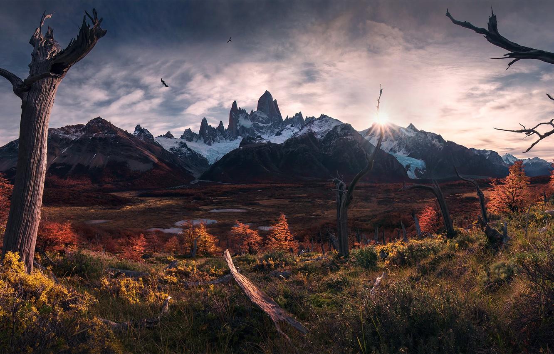 Фото обои осень, солнце, свет, птицы, Южная Америка, Патагония, горы Анды
