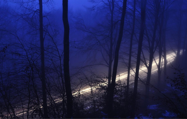 Фото обои дорога, лес, свет, деревья, ночь, природа