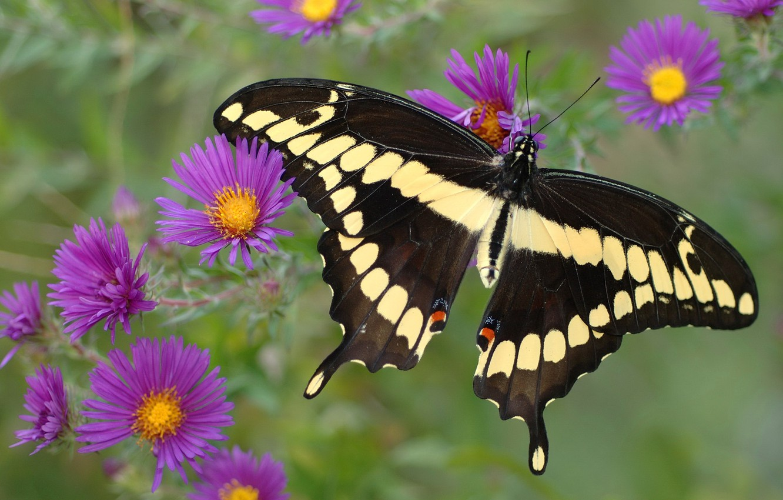 Обои насекомое, цветы. Природа foto 8