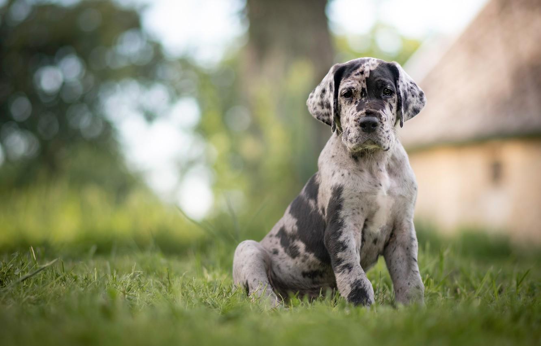 Фото обои трава, собака, щенок, боке