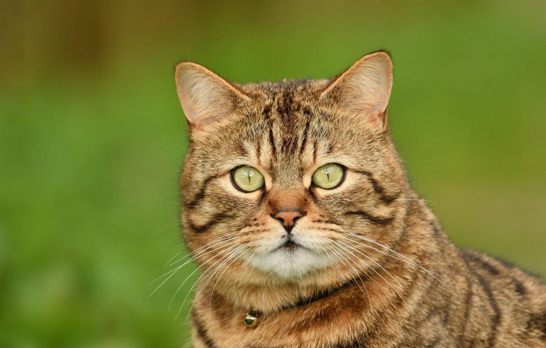 Фото морд кошек