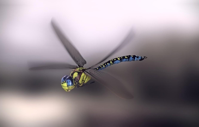 Фото обои стрекоза, арт, monteillard damien, Blue emperor dragonfly