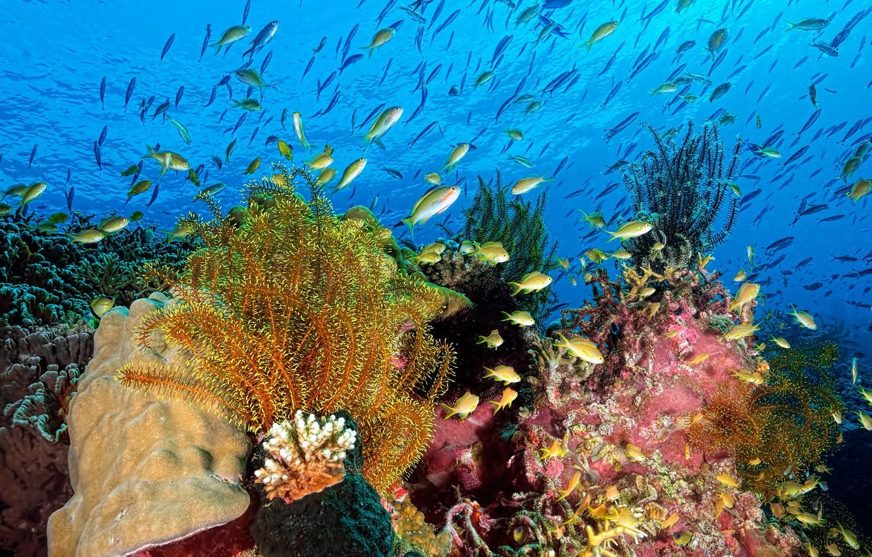 подводная природа картинки давно перестала быть