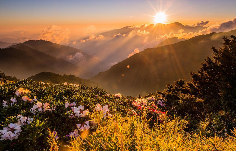 Фото обои зелень, небо, солнце, облака, лучи, свет, пейзаж, цветы, горы, природа, туман, блики, рассвет, холмы, вершины, …