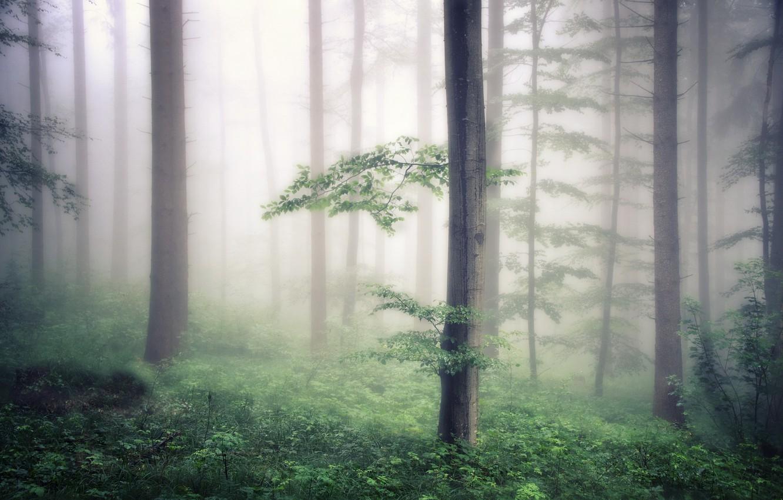 вредители обои на рабочий стол лес в тумане мрачноватый приурочены открытию