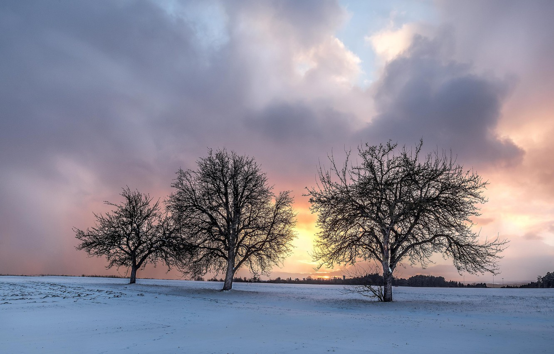 Фото обои зима, поле, деревья