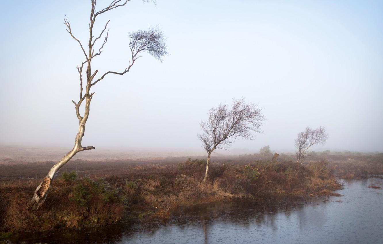 Фото обои деревья, туман, река