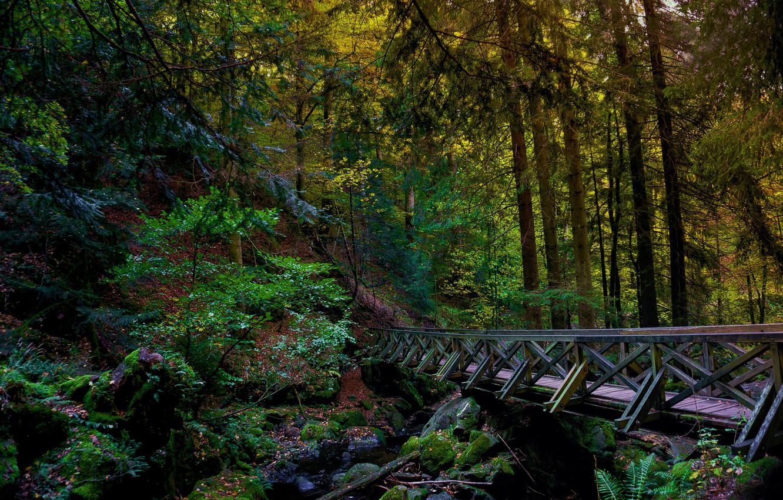 Фото обои лес, мост, река, hdr, мост через реку в лесу, мост в лесу